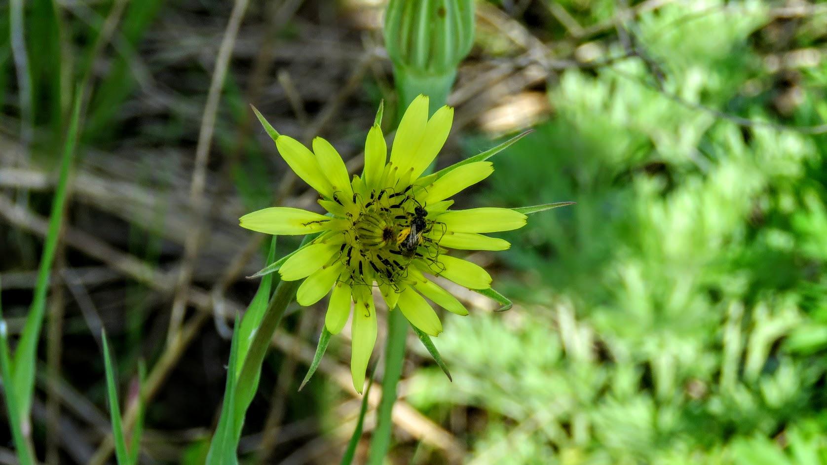 Цветики, птички, маслята и сосновые шишки. Мои припасы на зиму) IMG_6600.jpg