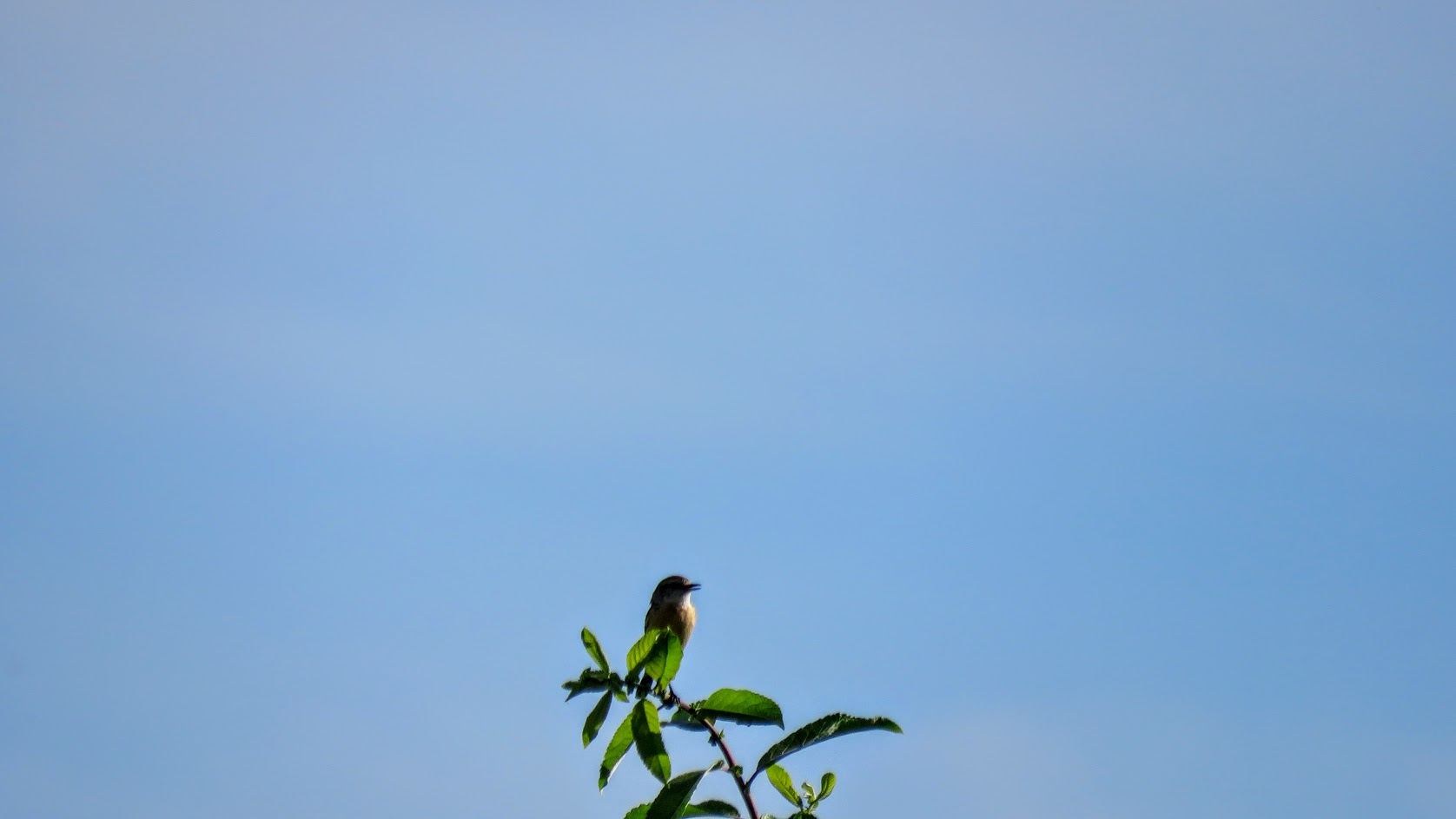 Цветики, птички, маслята и сосновые шишки. Мои припасы на зиму) IMG_6603.jpg