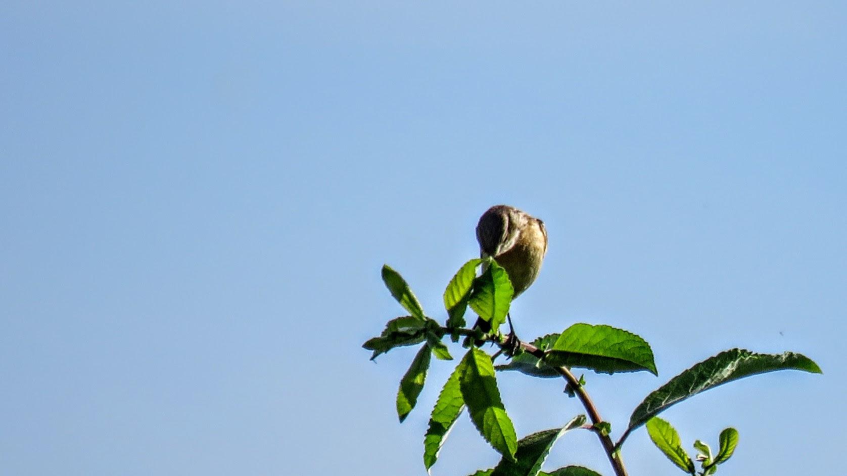 Цветики, птички, маслята и сосновые шишки. Мои припасы на зиму) IMG_6605.jpg
