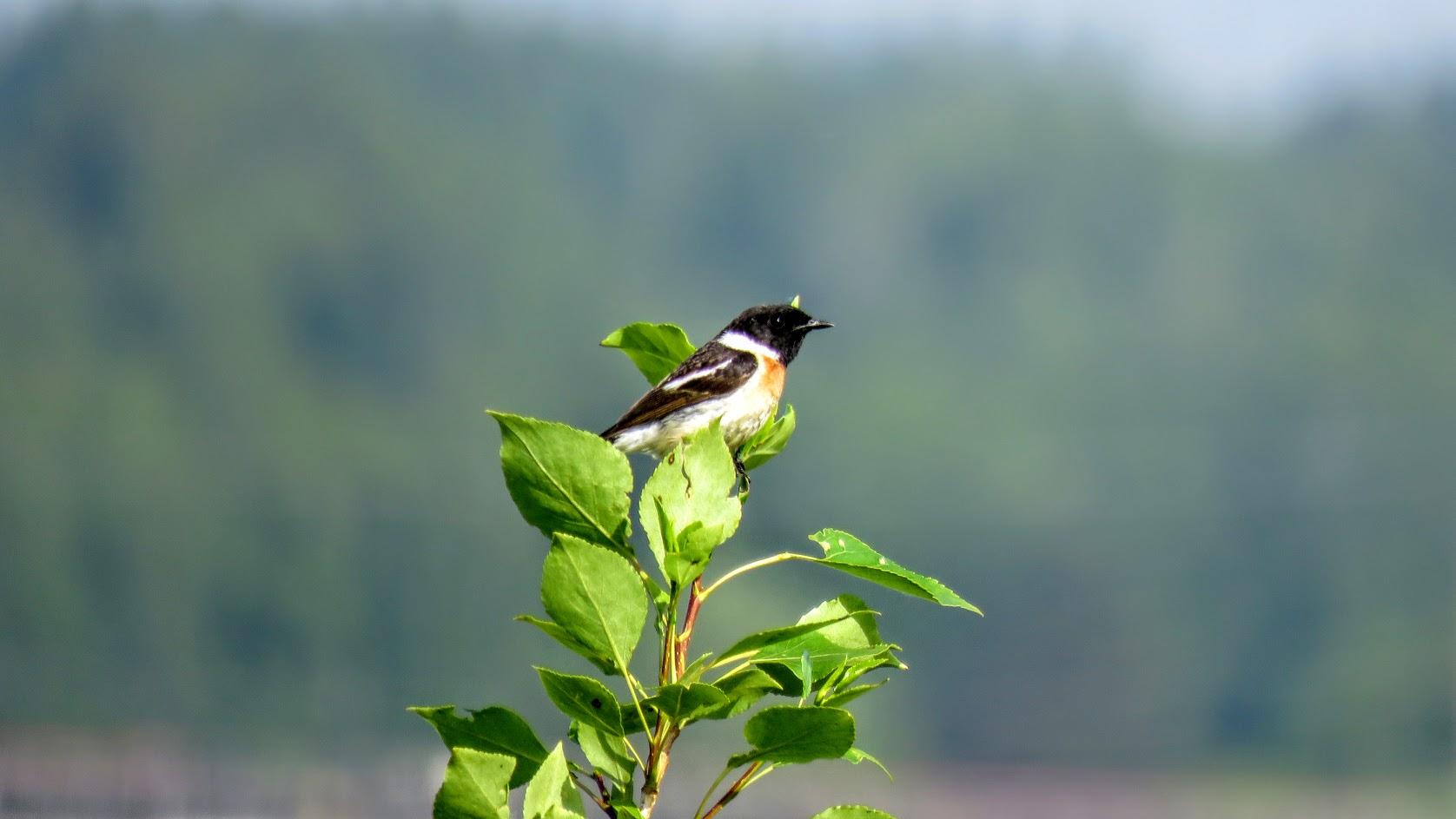 Цветики, птички, маслята и сосновые шишки. Мои припасы на зиму) IMG_6666.jpg