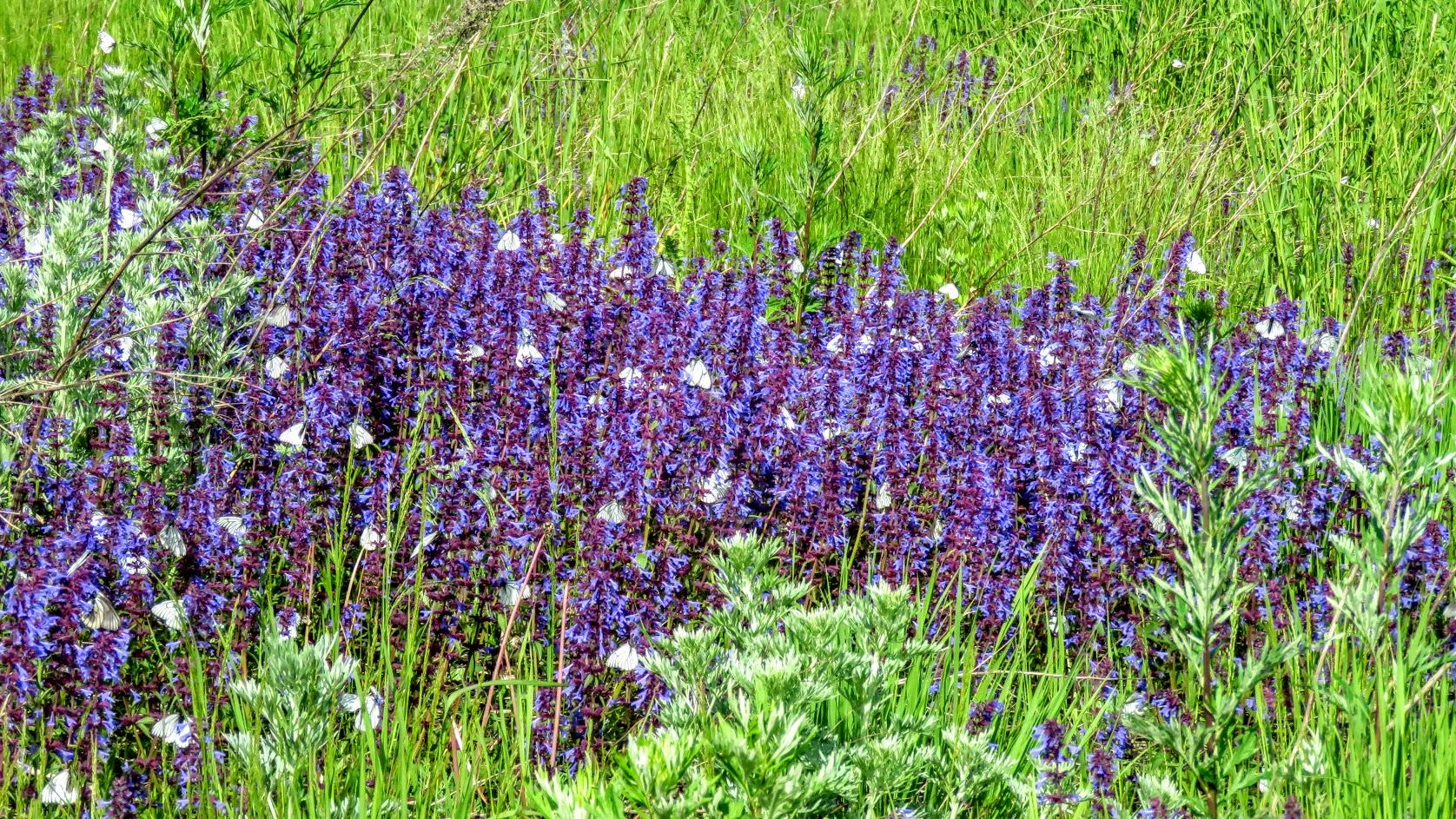Цветики, птички, маслята и сосновые шишки. Мои припасы на зиму) IMG_6669.jpg
