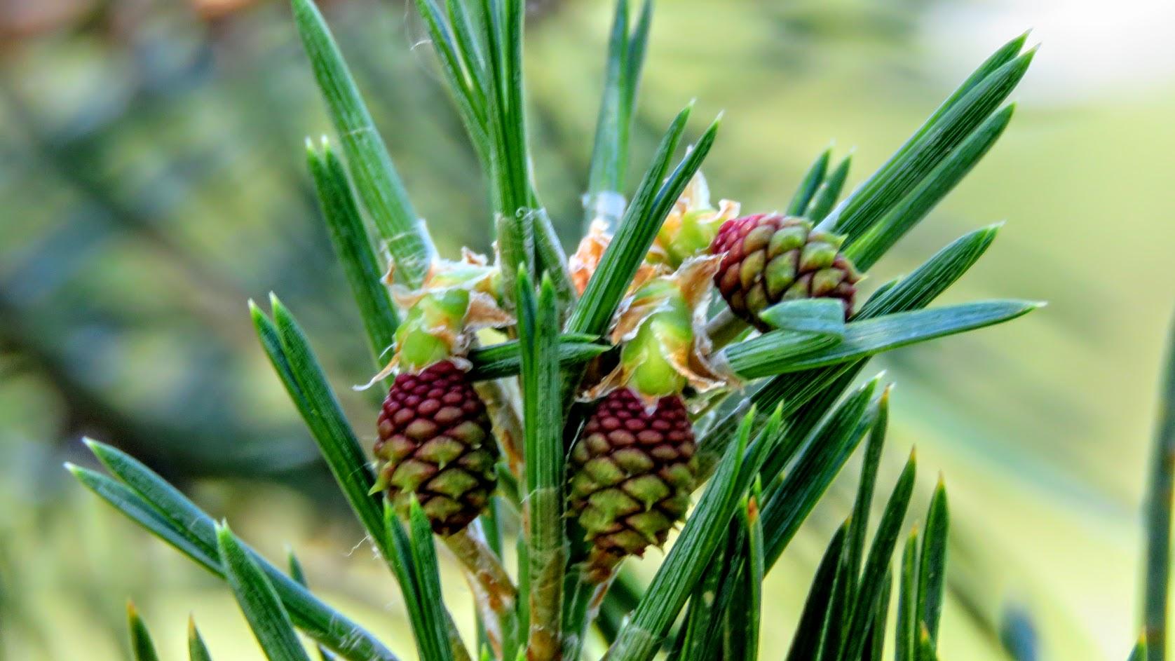 Цветики, птички, маслята и сосновые шишки. Мои припасы на зиму) IMG_6708.jpg
